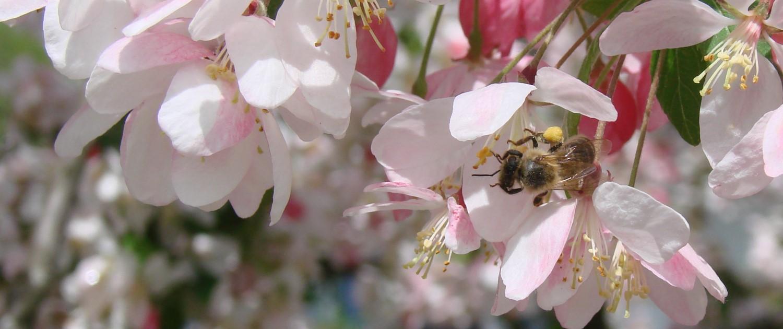 Stadt Bienen erleben in Albisrieden Zürich