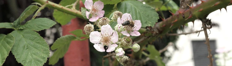 Imkerei Stadtbiene - Honig aus Zürich - stadtbienes Webseite