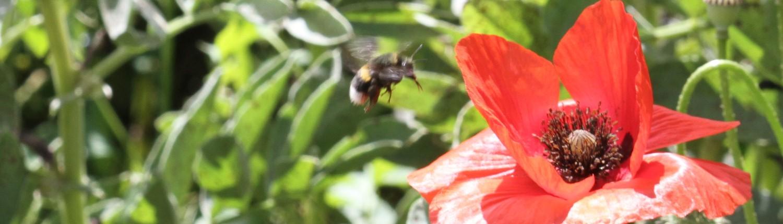 einen praktischen und anschaulichen Einstieg in die Welt der Honig- und Wildbienen